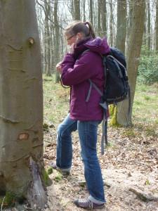 Baum hören Mo